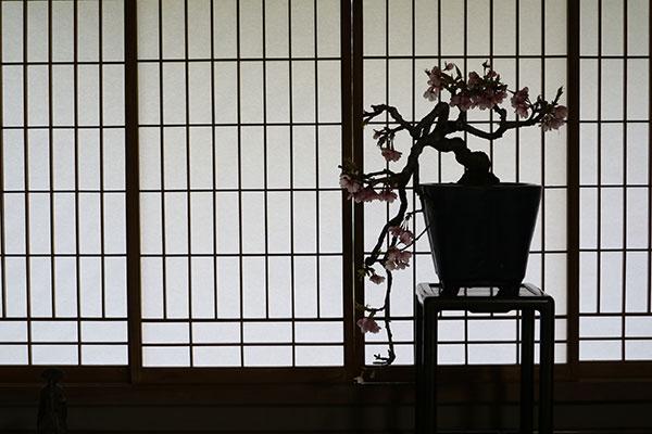 芙蓉@修善寺の和カフェ