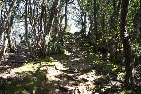 城山@伊豆の国の低山ハイキング