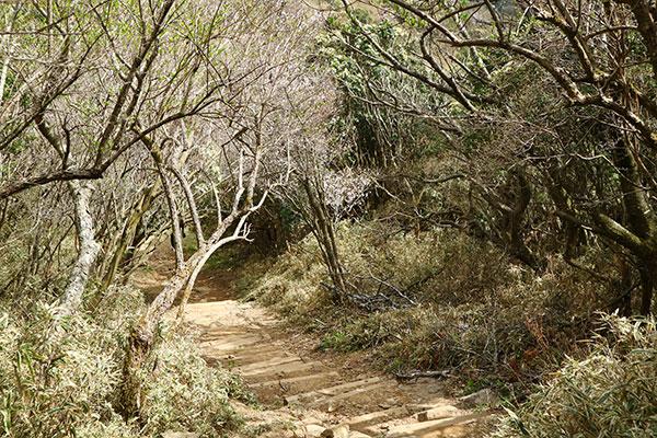 達磨山レストハウスー金冠山の低山登山