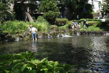 白滝公園|三島市|水の都三島市ならではの湧水公園で水遊び♪