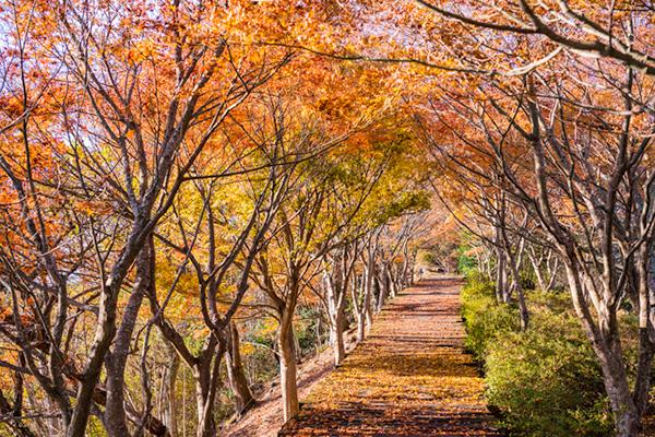 伊豆の国パノラマパークのボードウォーク